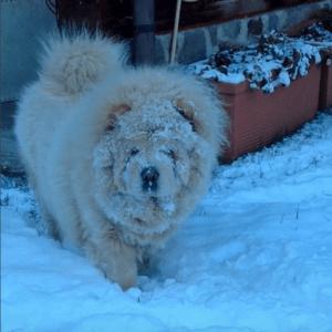7 historias de mascotas fantasmas que volvieron para ver a sus dueños