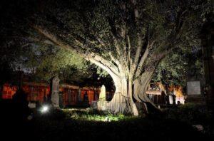 Cementerios Embrujados Arbol Del Vampiro