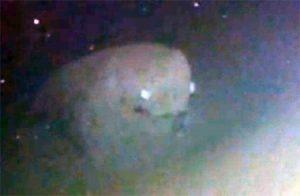 Misteriosas criaturas captadas en fotografías