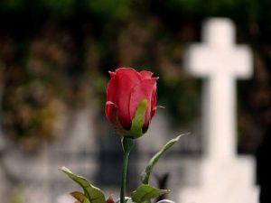 La tumba de las rosas