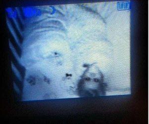 15 espeluznantes fotografías capturadas desde monitores de bebés