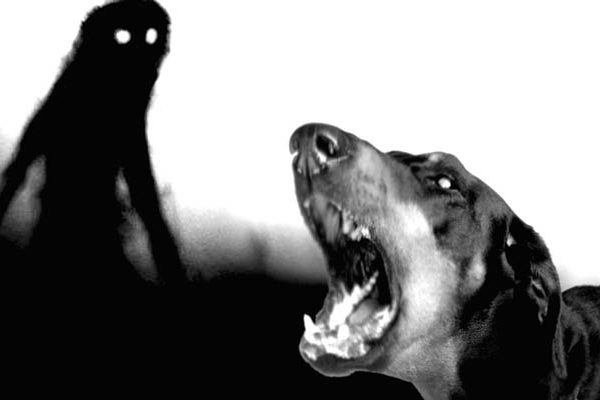¿Porque aúllan los perros? ¿Están viendo a la muerte?
