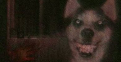 Leyenda De Smile Dog
