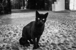 Leyenda Del Gato Negro Supertición