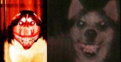 Smile Dog Verdadera Historia