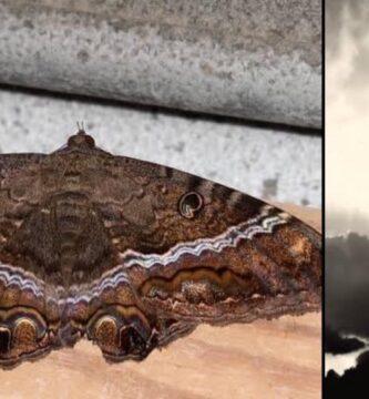 Mariposa Negra De La Muerte