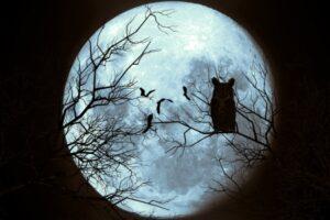 Luna Azul Terror
